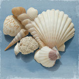 Shell Collection IV Prints by Bill Philip