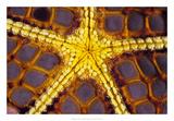 Purple Star - Wakatoobi, Indonesia Giclee Print by Beverly Factor