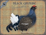 Black Grouse Tin Sign