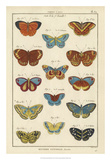 Histoire Naturelle Butterflies I Giclee Print by  Unknown