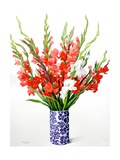 Red and White Gladioli Giclee Print by Christopher Ryland