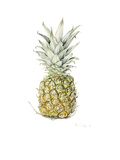 Ripe Pineapple, 2016 Giclee Print by Alison Cooper