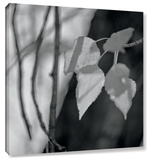 Leaves I Gallery Wrapped Canvas by Linda Omelianchuk