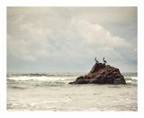 Affaire Pélican, L'|The Pelican Brief Affiches par Irene Suchocki
