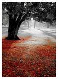 Autumn Contrast Art by  PhotoINC Studio