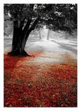 Autumn Contrast Posters by  PhotoINC Studio