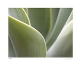 Agave V Limited Edition by Joy Doherty