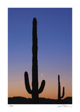 Arizona Moon & Cactus Giclee Print by Donald Paulson