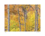 Aspen Trees III Giclee Print by Donald Paulson