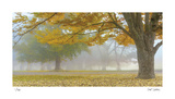 Autumn Gold Limited Edition by Donald Satterlee