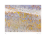 Aspen Forest Giclee Print by Donald Paulson