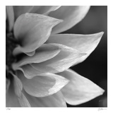 Botanical Study 1 Limited Edition by Stacy Bass