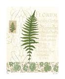 British Fern III Limited Edition by Paula Scaletta