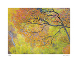 Aspen Trees IV Giclee Print by Donald Paulson