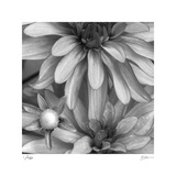 Botanical Study 10 Limited Edition by Stacy Bass