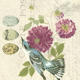 Bird Study 4 Édition limitée sur toile par Paula Scaletta