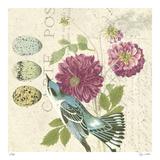 Bird Study 4 Édition limitée par Paula Scaletta