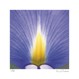 Blue Iris Abstract No 2 Limited Edition by Shams Rasheed