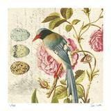 Bird Study 1 Særudgave af Paula Scaletta