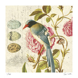 Bird Study 1 Limited Edition by Paula Scaletta