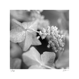 Botanical Study 2 Limited Edition by Stacy Bass