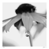 Botanical Study 11 Limited Edition by Stacy Bass