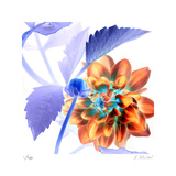 Budding Dahlia Limited Edition by Kate Blacklock