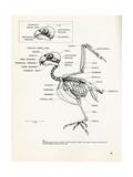 Descriptive Parts of a Parrot no. 24 Posters