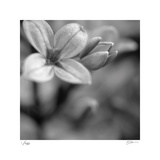 Botanical Study 4 Limited Edition by Stacy Bass