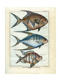 Planche 96 Fish - Poster