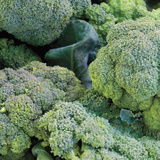 Broccoli Limited Edition on Canvas by Stacy Bass