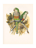 Monk Parakeet no. 461 Posters