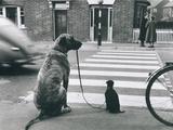 Dog Walking Dog, France - Reprodüksiyon
