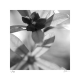 Botanical Study 8 Limited Edition by Stacy Bass