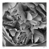 Botanical Study 15 Limited Edition by Stacy Bass