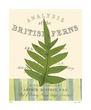British Fern I Limited Edition by Paula Scaletta