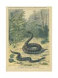Les Reptiles Les Plantes Veneneuses - Art Print