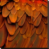 Feathered Friend - Burnt Orang Stretched Canvas Print by Julia Bosco