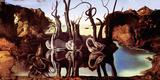 Salvador Dali- Swans Reflecting Elephants Poster van Salvador Dali