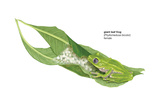 Giant Leaf Frog (Phyllomedusa Bicolor), Amphibians Posters by  Encyclopaedia Britannica