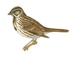 Song Sparrow (Melospiza Melodia), Birds Posters par  Encyclopaedia Britannica