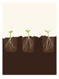 Transplants Posters by Jorey Hurley