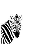Zebra 1 Art by Vera Mladenovic