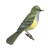 Great Crested Flycatcher (Myiarchus Crinitus), Birds Reproduction sur métal par  Encyclopaedia Britannica