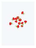 Rose Hips Prints by Jorey Hurley