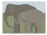 Elephant Prints by Jorey Hurley