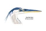 Great Blue Heron (Ardea Herodias), Birds Posters by  Encyclopaedia Britannica