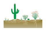 Vegetation Profile of a Desert. Biosphere, Earth Sciences Print by  Encyclopaedia Britannica