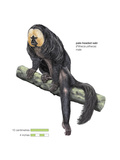 Male Pale-Headed Saki (Pithecia Pithecia), Monkey, Mammals Posters by  Encyclopaedia Britannica
