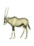 Oryx (Oryx Gazella), Mammals Print by  Encyclopaedia Britannica